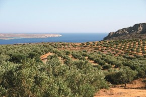 Olivové sady