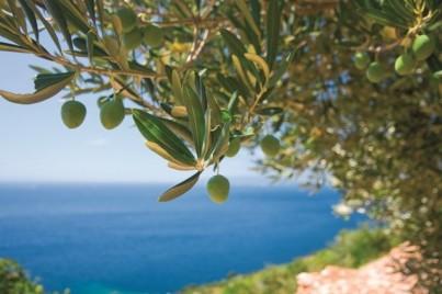 Řecký olivový olej a olivy