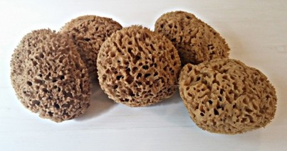 Přírodní mořská houba medové plástve velká