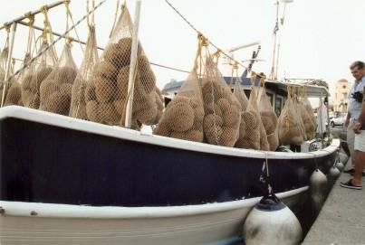 Přírodní mořské houby z Kréty