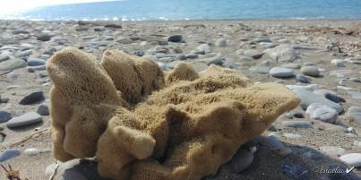 Přírodní mořská houba velká dekorativní